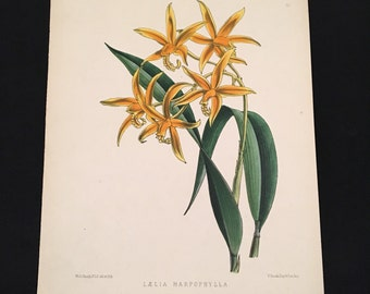 Orange Orchids - 1878 Botanical Print, Original Antique Print, Hand Colored Floral Magazine Print, Floral Print for Framing