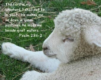 6.  Peaceful Lamb; Sheep; Photo greeting card; Nature art print; Gift; Inspirational Scripture Psalm 10:24