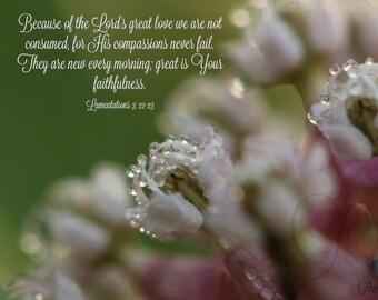 4. Soft Dew on Pink Milkweed; Photo greeting card; Nature art print; Flower; Gift; Inspirational Scripture Lamentations 3:22-23