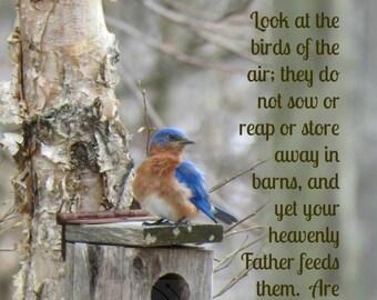 12. Bluebird on House; Photo greeting card; Nature Art print; Gift; Bird; Inspirational Scripture Matthew 6:26