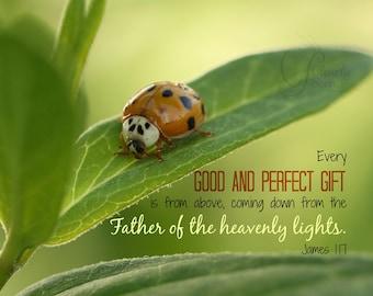 1. Ladybug on Milkweed; Photo greeting card; Insect; Nature Art print; Gift; Inspirational Scripture James 1:17