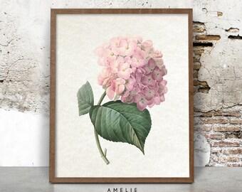 Printable Hydrangea Illustration, Botanical Flower, Wall Art, Vintage, French Farmhouse, Cottage, Shabby Chic, Pink Home Decor