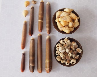 115 Pc Sea Shell Seaside Mix of Shells and Sea Urchin Sticks Assorted Sizes