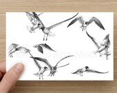 Card  - Flock of Birds - Seagulls - Celebration - Greeting Cards - Birthday Card - Mothers Day Card