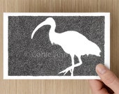 Card  - Ibis - Bird Drawing - Bin Chicken - Celebration - Greeting Cards - Birthday Card