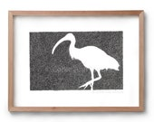 Absence of an Ibis - Bird Drawing - Bin Chicken - Artwork - Drawing - Print - Gift for Him - Black and white wall art