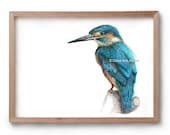 Kingfisher - Blue Bird - Fineliner - Pen & ink - Artist Print -Artwork - Drawing - Gift for Her - Gift for Him