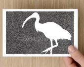 Card  - Ibis - Bird Drawing - Bin Chicken - Celebration - Greeting Cards - Birthday Card - Mothers Day Card