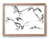 Flock of Birds - Black and White Flying Birds - Artwork - Drawing - Print - Black and white wall art