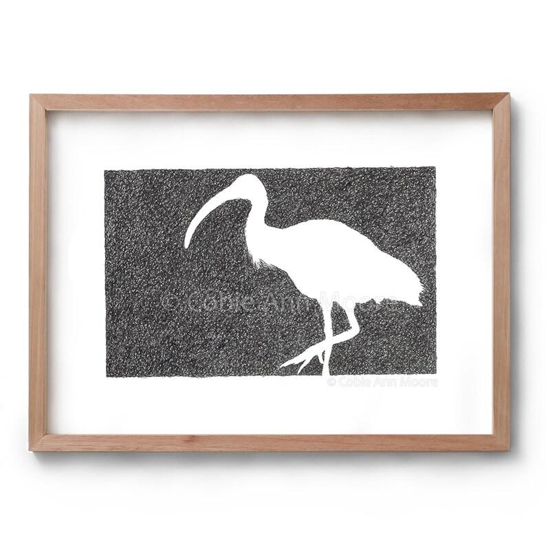 Absence of an Ibis  Bird Drawing  Bin Chicken  Artwork  image 0
