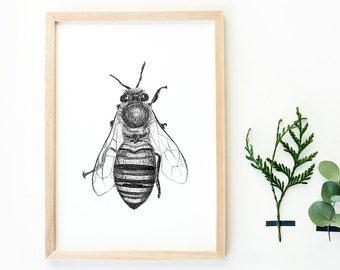 Honey bee art print - pencil drawing bee print, insect drawing, honey bee poster, poster insect art, bee wall decor, bee gift, honeybee art