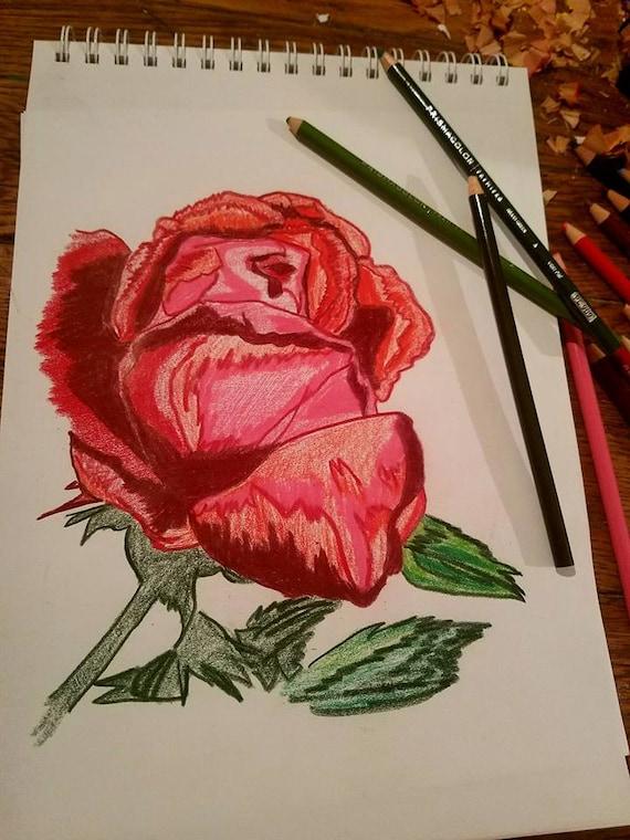 Flor Rosa Roja Dibujo Color Lápiz Arte Bosquejado Por Scott D Etsy