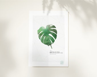 Poster 20x30 inch • Monstera Deliciosa • Poster High Quality InsidePapers • Tropical vegetal botanic • Minimalist illustration