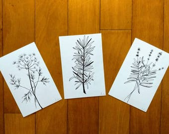 Original Hand Illustrated Postcards of Herbs (set of three) Dill, Lavender, Rosemary