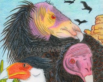 """Amérique du Nord vautours impression 8,5 """"x 11»"""