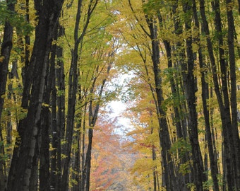 Tunnel of Maples