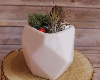 White Geometric Vase Terrarium