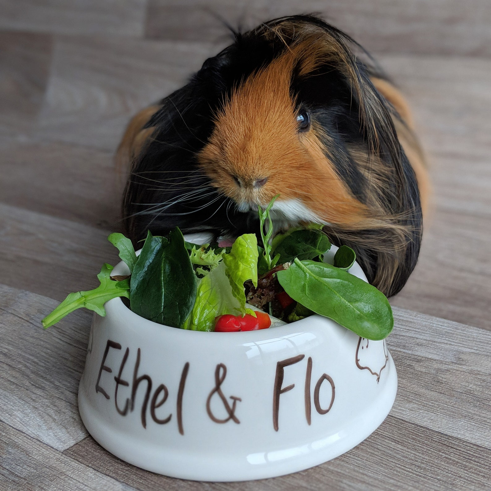 Personalised guinea pig bowl