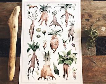 Mandrake, Watercolor, Art print.