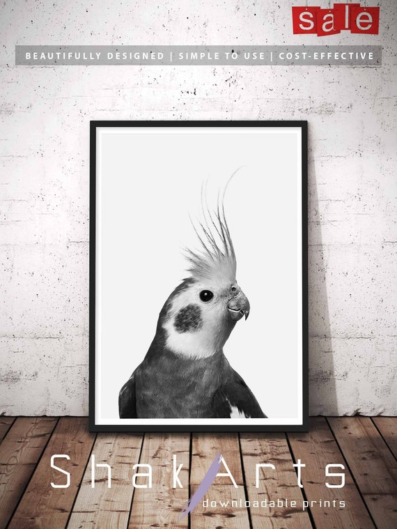 Cockatiel Tropical Bird Wall Art, Animal Prints, Feather Art Print, Black  And White Art, Animal Nursery Art, Wall Decor, Instant Download