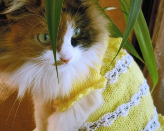 Knitted cat Clothing Pet Gift Pet Dresses cat sweater wedding cat Dress for Small Dogs sphynx clothing sphynx sweater Wool cat lover gift