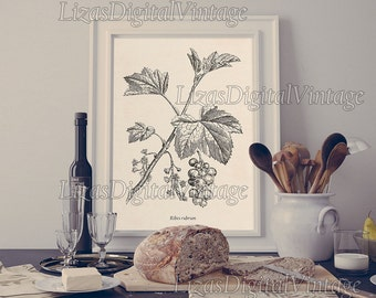 Kitchen Art Fruit Art Currant Berry Print Instant Download Etsy