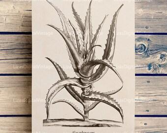 Botanical printables, Botanical decor, Succulent print, Succulent decor, Aloe, Botanical, Vintage print, Antique art print, PNG JPG 300dpi