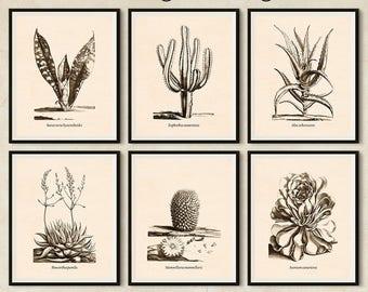 Succulent print, Instant download printable art, Set of 6 prints, Succulent art, Haworthia, Mammillaria, Aeonium, Euphorbia, Sansevieria