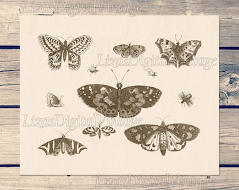 Butterfly vintage, Butterfly wall art, Insect printable print, Butterfly illustration, Instant download insect print, Antique art print, JPG