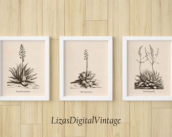 Succulent, Set of 3 prints, Succulent art print, Succulent wall art, Botanical print Vintage, Set of 3 wall art, Instant download, Print JPG