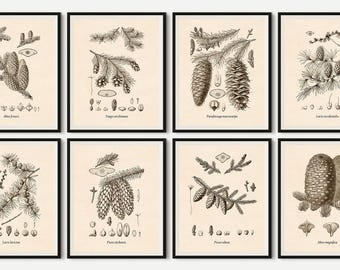 Set of 8 tree prints, Vintage botanical print set, Print set, Tree art, Tree print, Conifers, Printable art, Botanical, 8x10, 11x14, A3, JPG