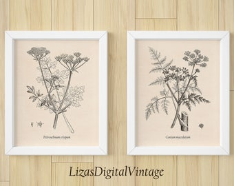 Antique botanical print, Botanical print set, Wall art vintage, Set of 2, Instant download print, Botanical art, Botanical art prints JPG