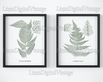 Digital print, Printable set, Fern print download, Fern art, Vintage botanical prints, Set of 2, Antique illustration, 8x10, 11x14, A3, JPG