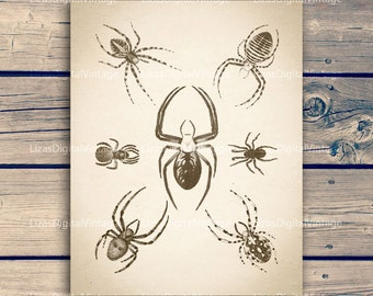 Spider, Insect illustration, Vintage insect print, Instant download printable art, Printable vintage, Spider print, 11x14 print; 8x10 print
