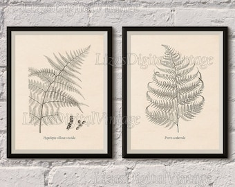 Printable set, Fern print, Illustration, Botanical digital print, Vintage art, Antique illustration, Wall art ferns, 8x10, 11x14, A3, JPG