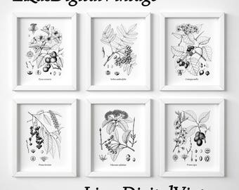Instant download black and white botanical print set, Tree art, Fruit trees, Set of 6 prints, Antique prints, Vintage print set, Art, JPG
