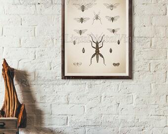 Cicada print vintage, Antique insect wall art, Cicada illustration, Instant download print, Vintage wall art, Insect illustration, Printable