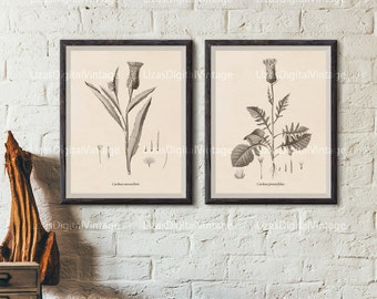 Botanical print set, Printable set, Set of 2 prints, Thistle print, Botanical art, Vintage botanical prints, Antique botanical print, JPG