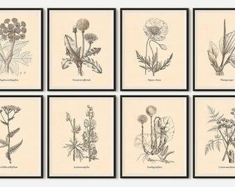 Set of 8 prints, Botanical prints, Wall art print set, Wall art set, Set of vintage botanical prints, Printable set, Illustration set, JPG
