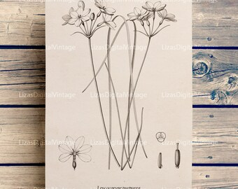 Printable botanical art, Print download, Floral wall art, Botanical chart, Wall art printable, Botanical illustration, PNG JPG 300dpi