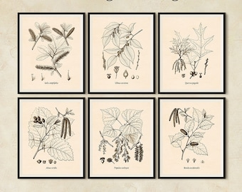 Botanical print set, Set of 6 prints, Botanical print vintage, Antique botanical prints, Tree print, Printable set, Botanical digital JPG
