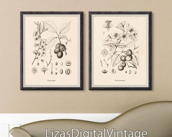 Set of 2 prints, Large botanical prints, Print set, Wall art printable, Botanical print set, Print download, Botanical prints vintage, JPG