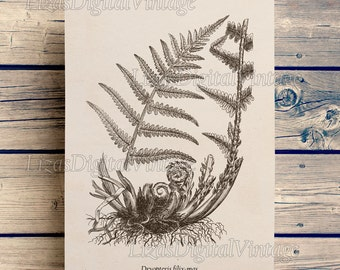 Wall art, Print art, Instant download printable, Fern print vintage, Antique botanical print, Home wall art, Digital art print,  JPG PNG