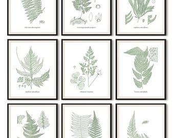 Home wall decor, Instant download print set, Set of 9 prints, Antique fern illustrations, Illustration set, Vintage botanical print set, JPG