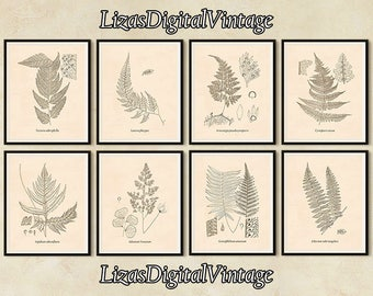 Set of 8 botanical prints, Fern print set, 8x10 wall art, 11x14 wall art, A3 wall art, Printable botanical set, Fern art, Vintage prints JPG