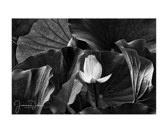 Flower Art, Leaf Print, Lotus Flower, Leaf Photo,  Flower Print, Flower Photo, Matted Print, Nature Photography, Leaf Photography, Lotus