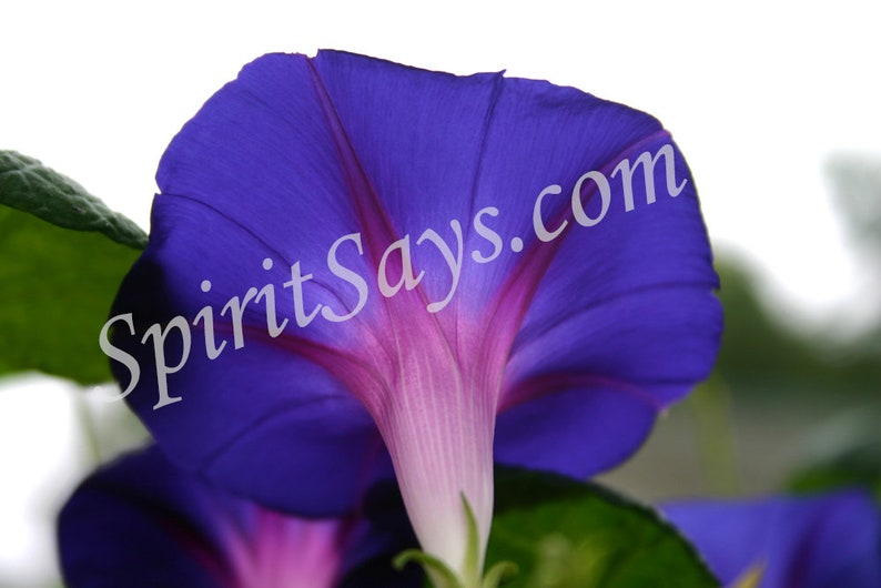 May You Know Joy  Morning Glory Photo Notecard Photo image 0