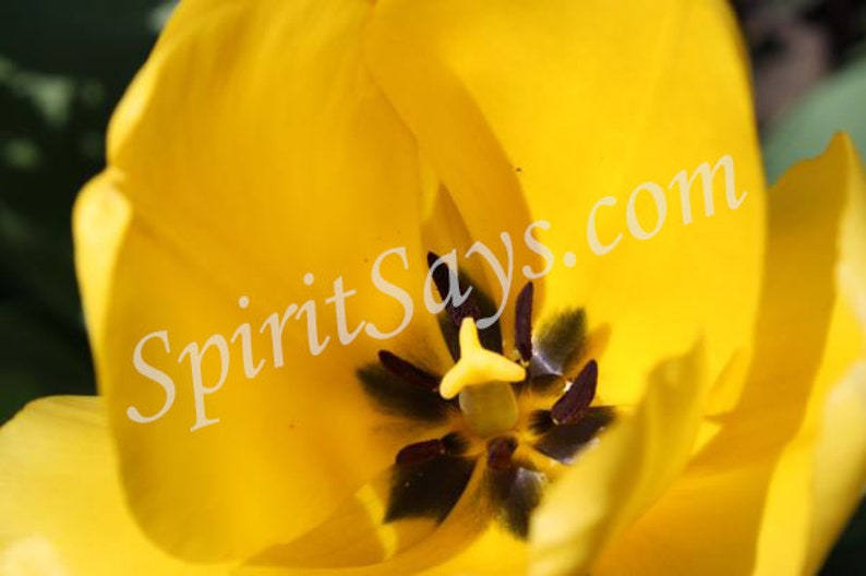 Sunny Days  Tulip Photo Notecard Photo Greeting Card Blank image 0