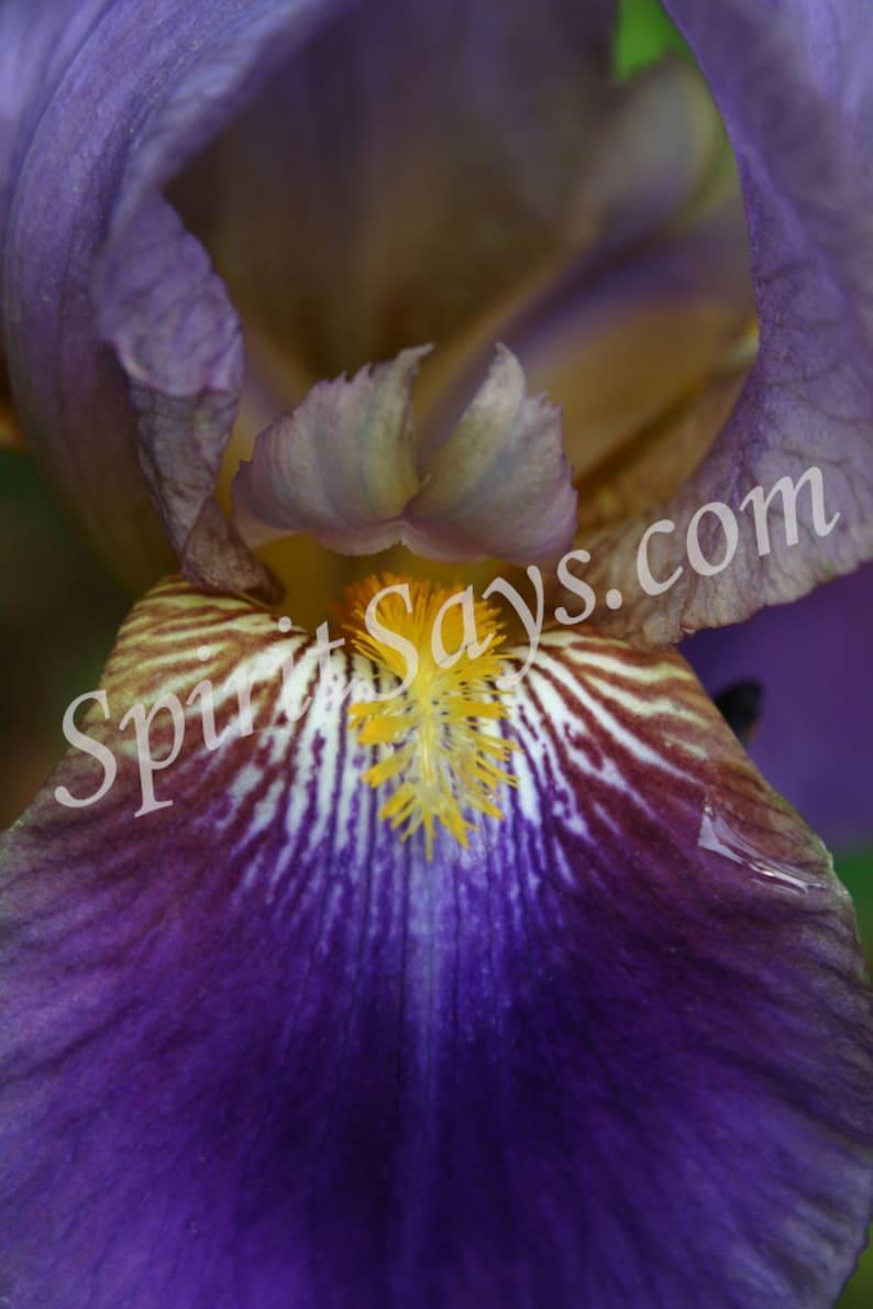 Warrior Queen  Iris Photo Notecard Photo Greeting Card image 0