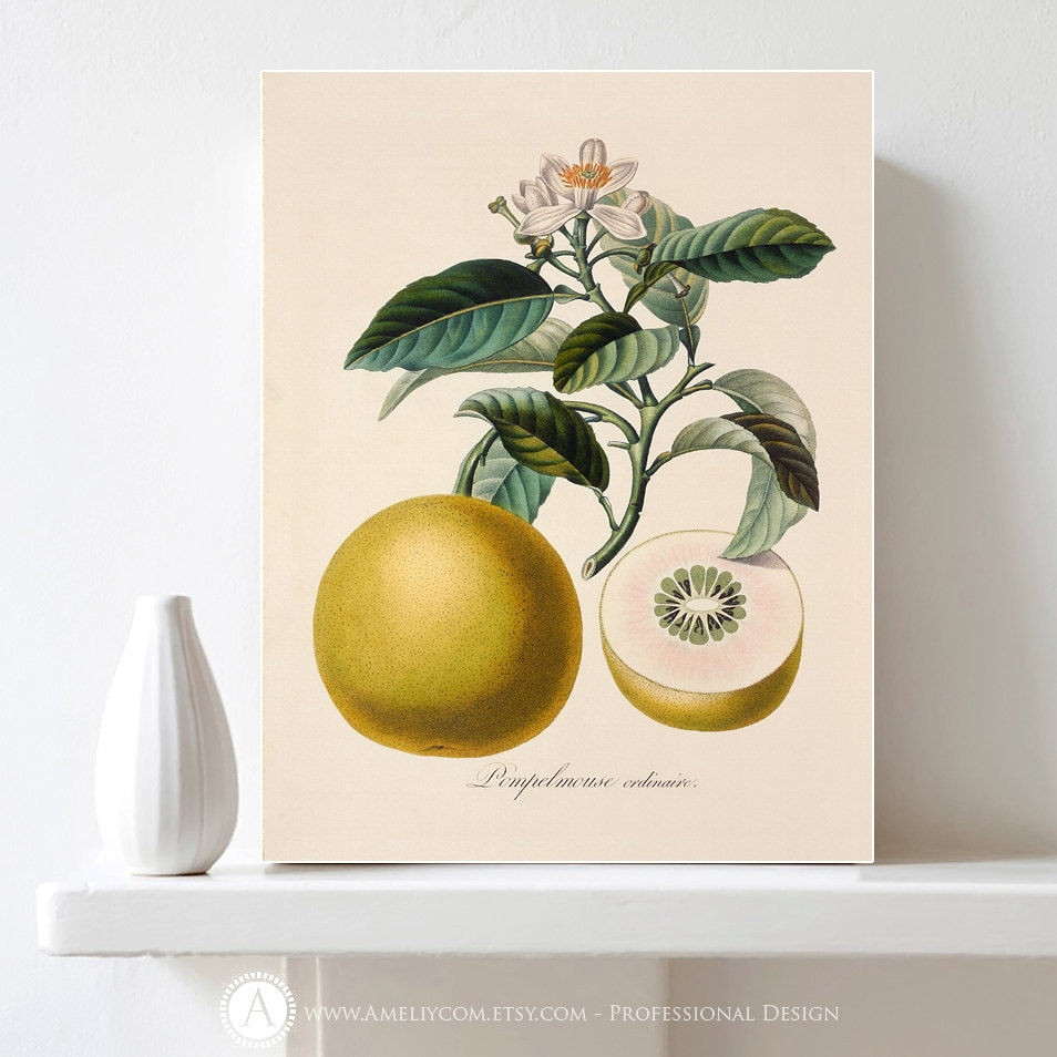 Botanical fruit print printable kitchen decor citrus print - Kitchen curtains with fruit design ...
